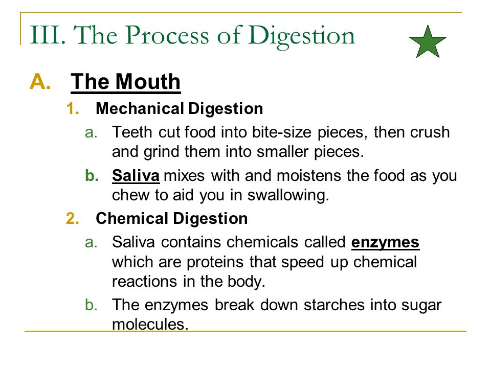 III. The Process of Digestion