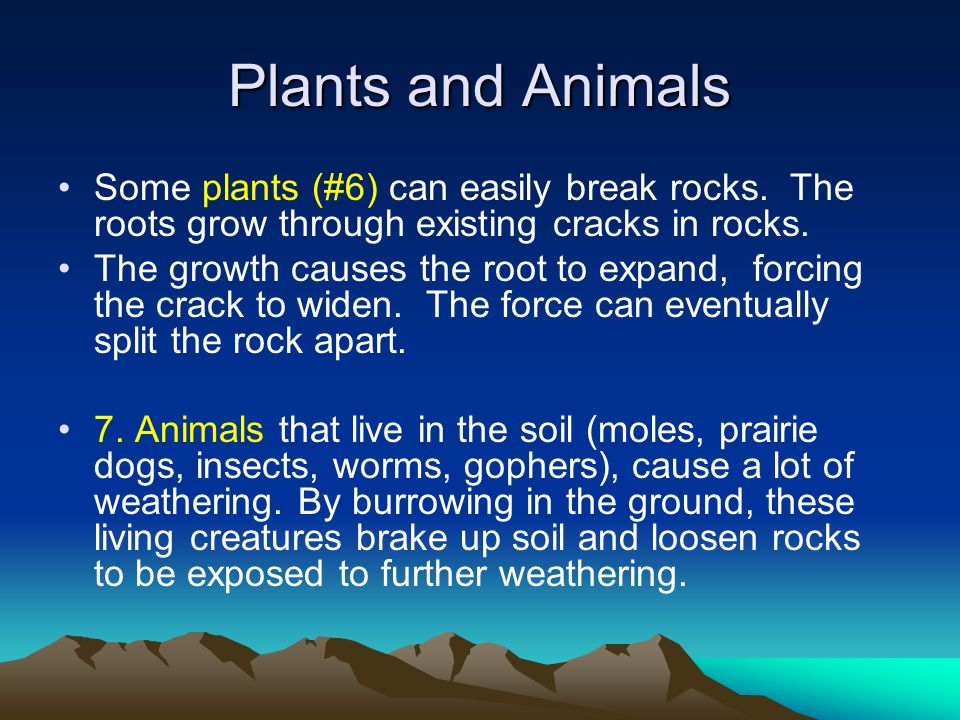 Plants and Animals Some plants (#6) can easily break rocks. The roots grow through existing cracks in rocks.