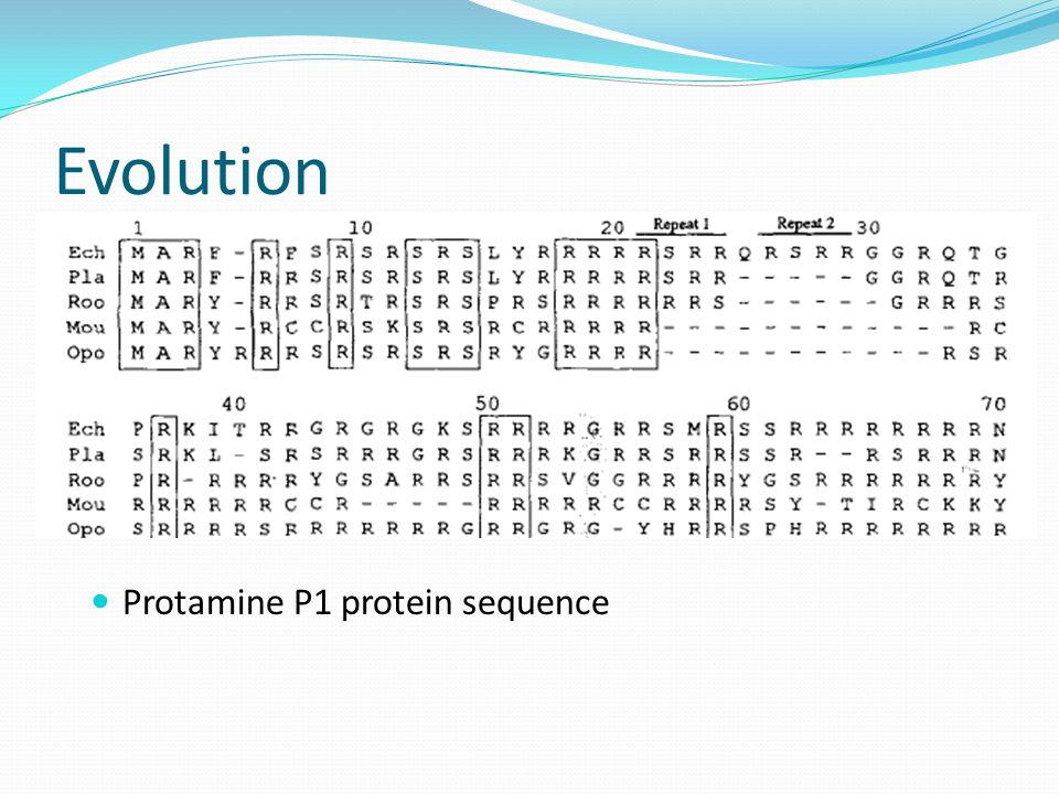 Evolution Protamine P1 protein sequence