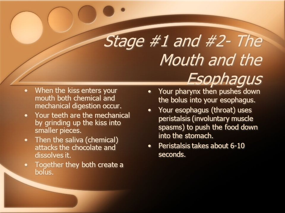 Stage #1 and #2- The Mouth and the Esophagus