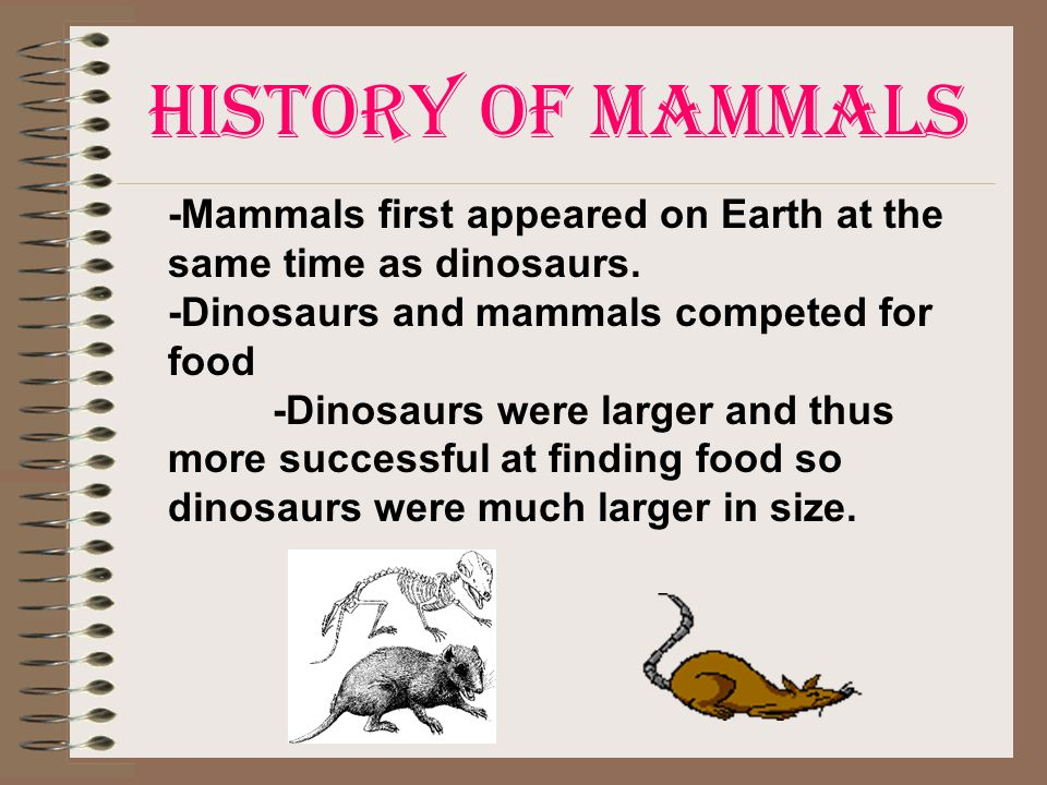 History of Mammals -Mammals first appeared on Earth at the same time as dinosaurs. -Dinosaurs and mammals competed for food.