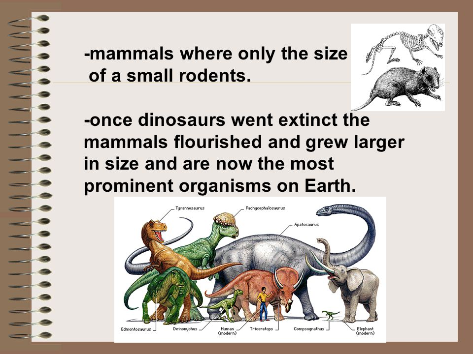 -mammals where only the size
