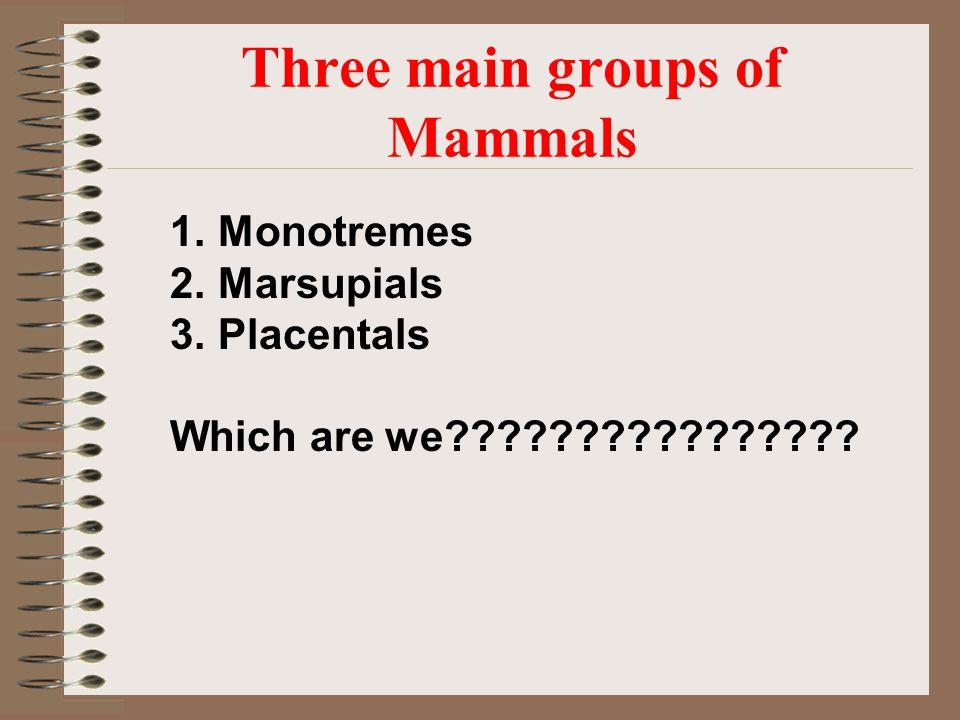 Three main groups of Mammals