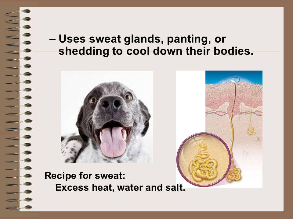 Uses sweat glands, panting, or shedding to cool down their bodies.