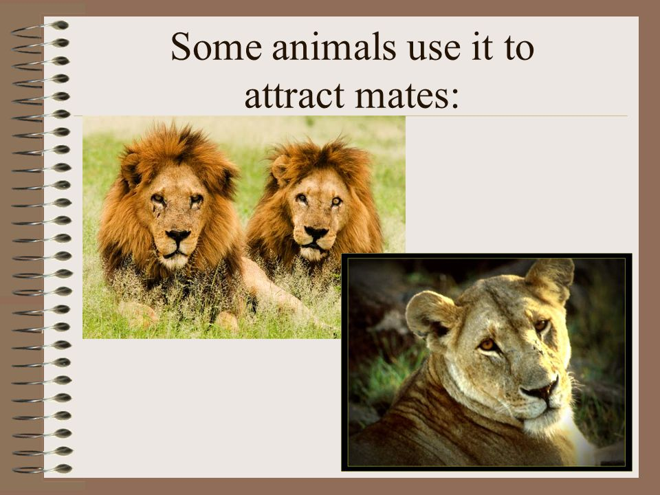 Some animals use it to attract mates: