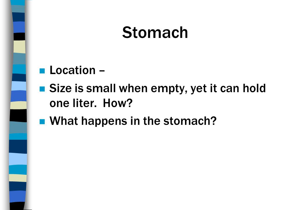 Stomach Location – Size is small when empty, yet it can hold one liter.