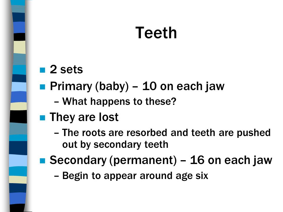Teeth 2 sets Primary (baby) – 10 on each jaw They are lost