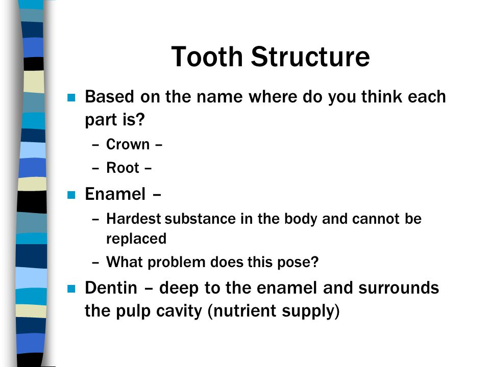 Tooth Structure Based on the name where do you think each part is