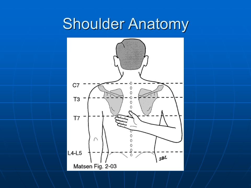 Shoulder Anatomy 23