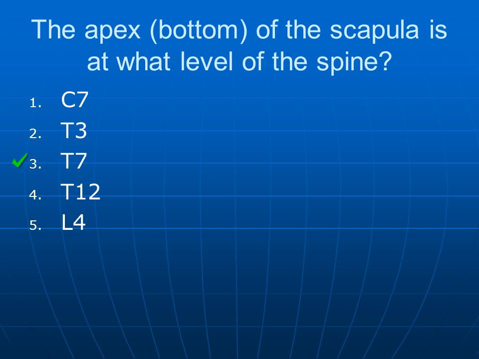 The apex (bottom) of the scapula is at what level of the spine