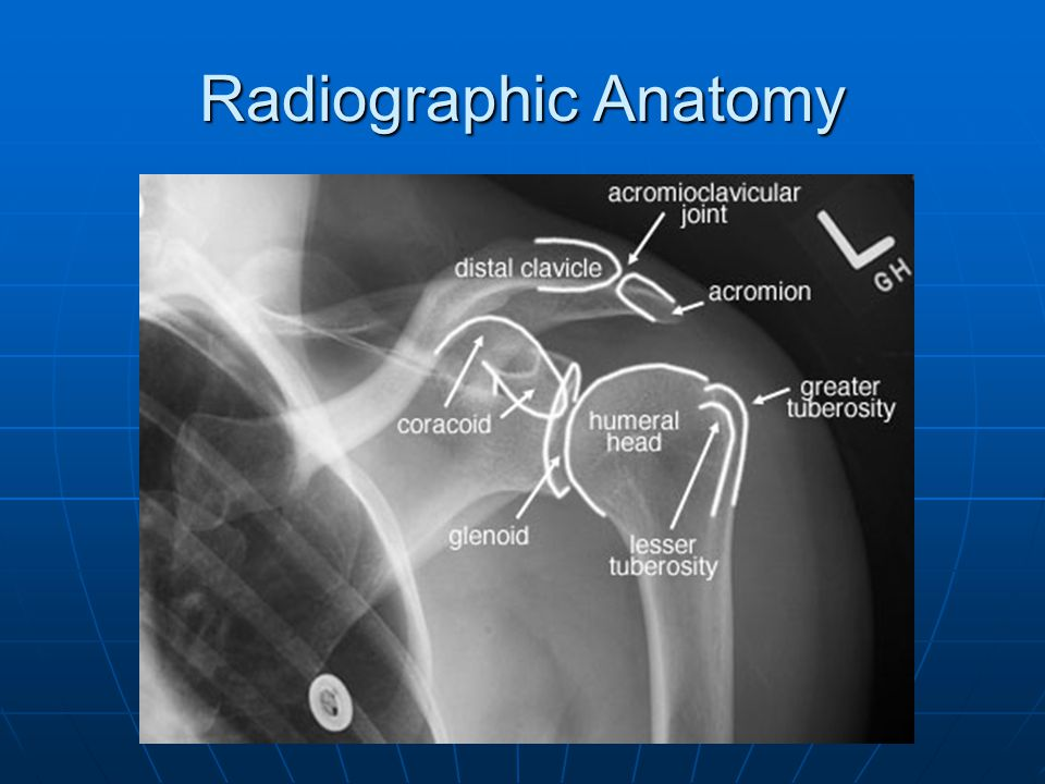 Radiographic Anatomy 7