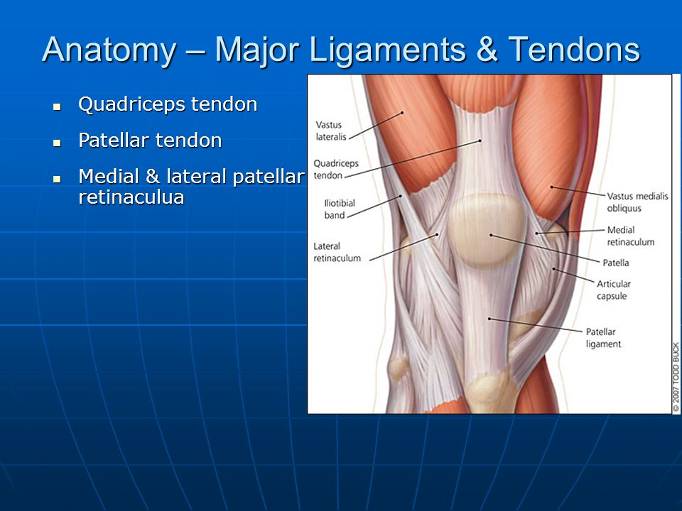 Anatomy – Major Ligaments & Tendons