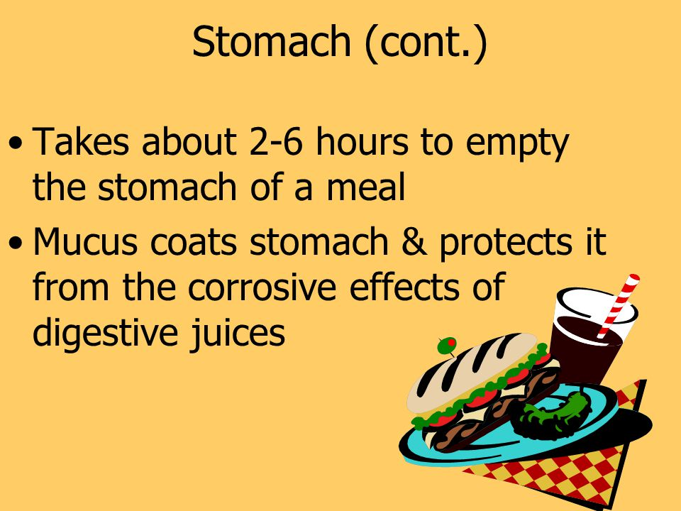 Stomach (cont.) Takes about 2-6 hours to empty the stomach of a meal