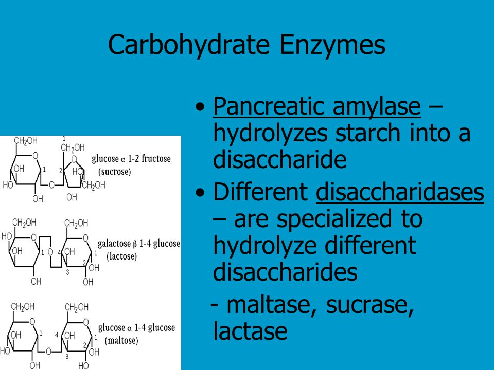 Carbohydrate Enzymes Pancreatic amylase – hydrolyzes starch into a disaccharide.