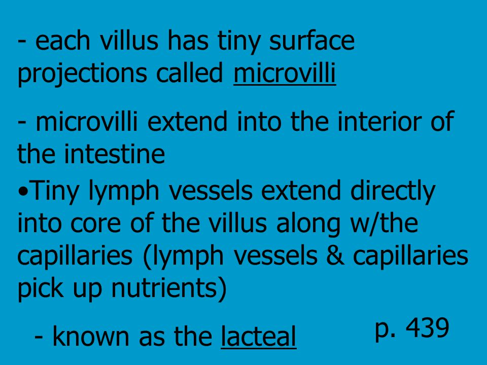 - each villus has tiny surface projections called microvilli