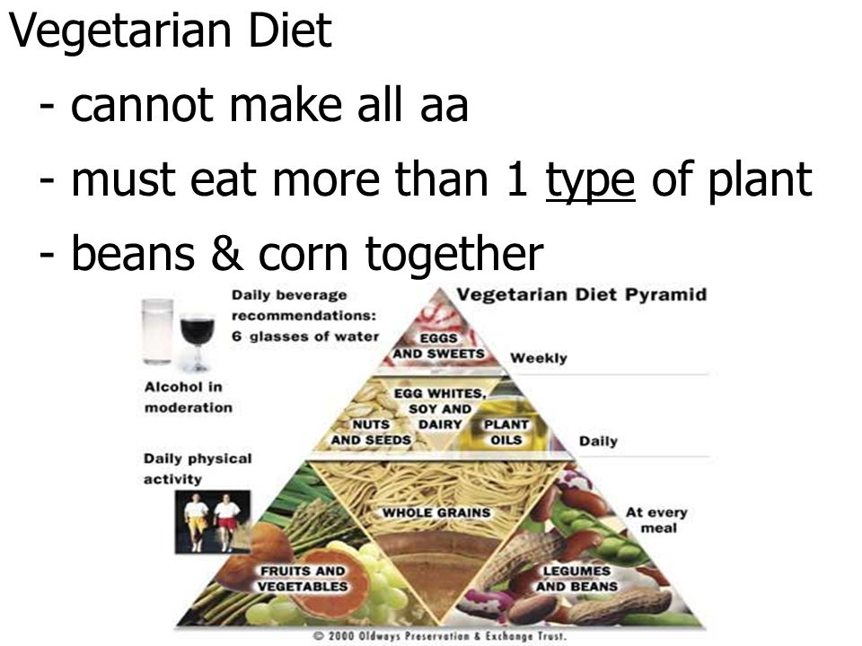 Vegetarian Diet - cannot make all aa - must eat more than 1 type of plant - beans & corn together