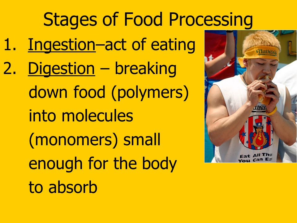 Stages of Food Processing