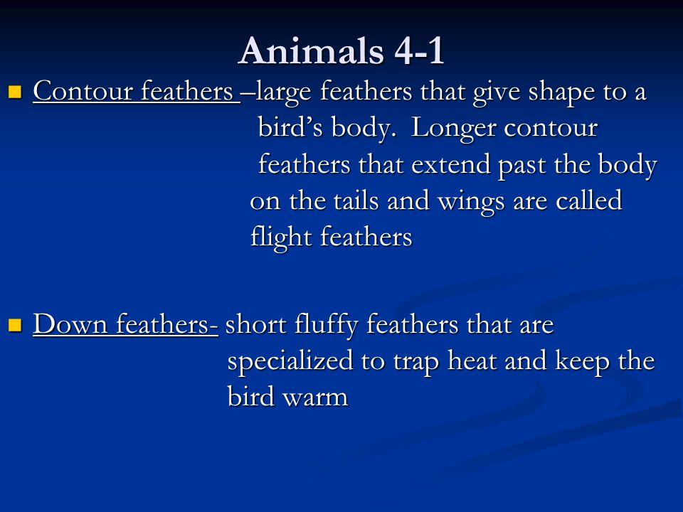 Animals 4-1