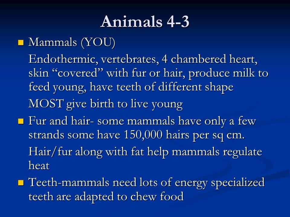 Animals 4-3 Mammals (YOU)