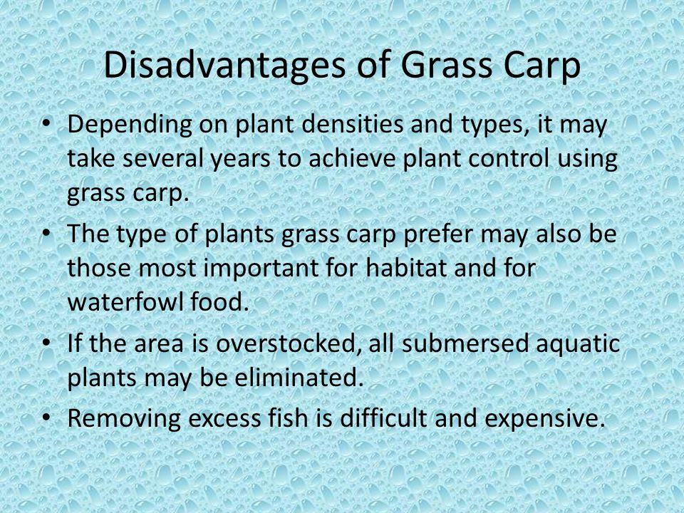 Disadvantages of Grass Carp