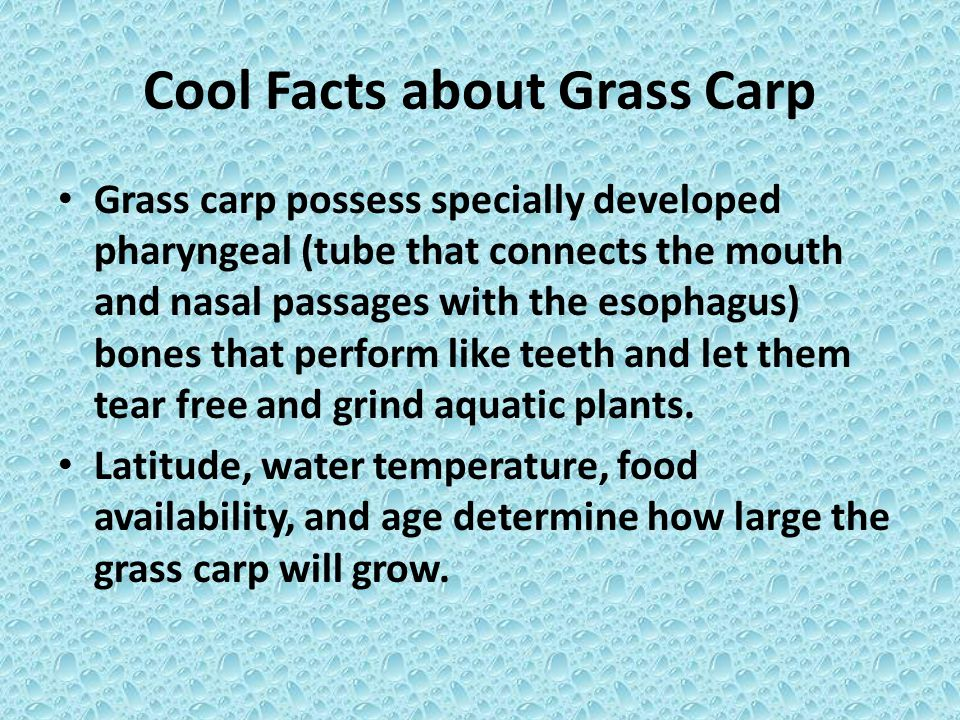 Cool Facts about Grass Carp