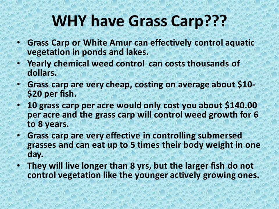 WHY have Grass Carp Grass Carp or White Amur can effectively control aquatic vegetation in ponds and lakes.