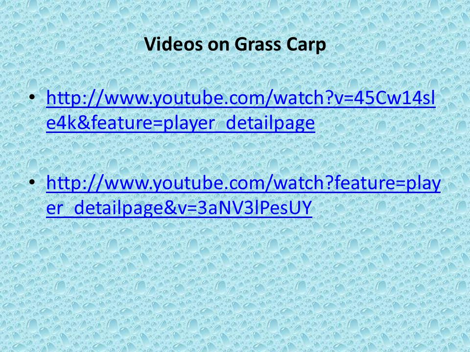 Videos on Grass Carp http://www.youtube.com/watch v=45Cw14sle4k&feature=player_detailpage.