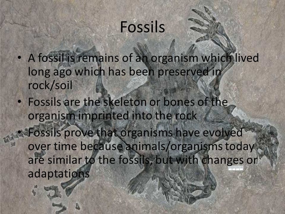 Fossils A fossil is remains of an organism which lived long ago which has been preserved in rock/soil.