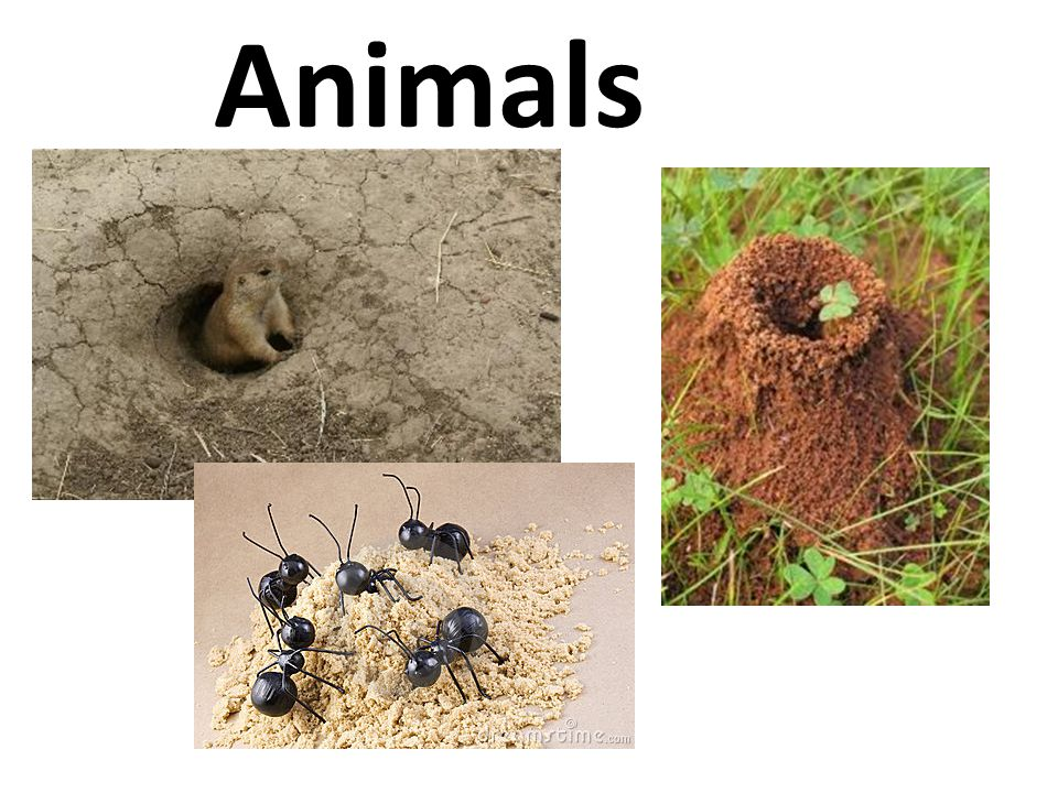 Animals http://www.ehow.com/info_7934416_moth-balls-gopher-repellent.html.