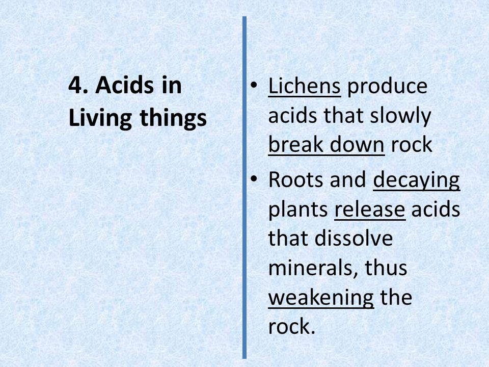 4. Acids in Living things Lichens produce acids that slowly break down rock.