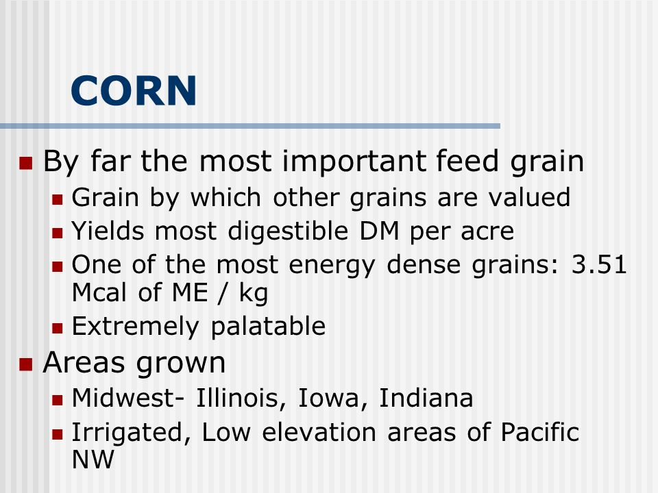 CORN By far the most important feed grain Areas grown
