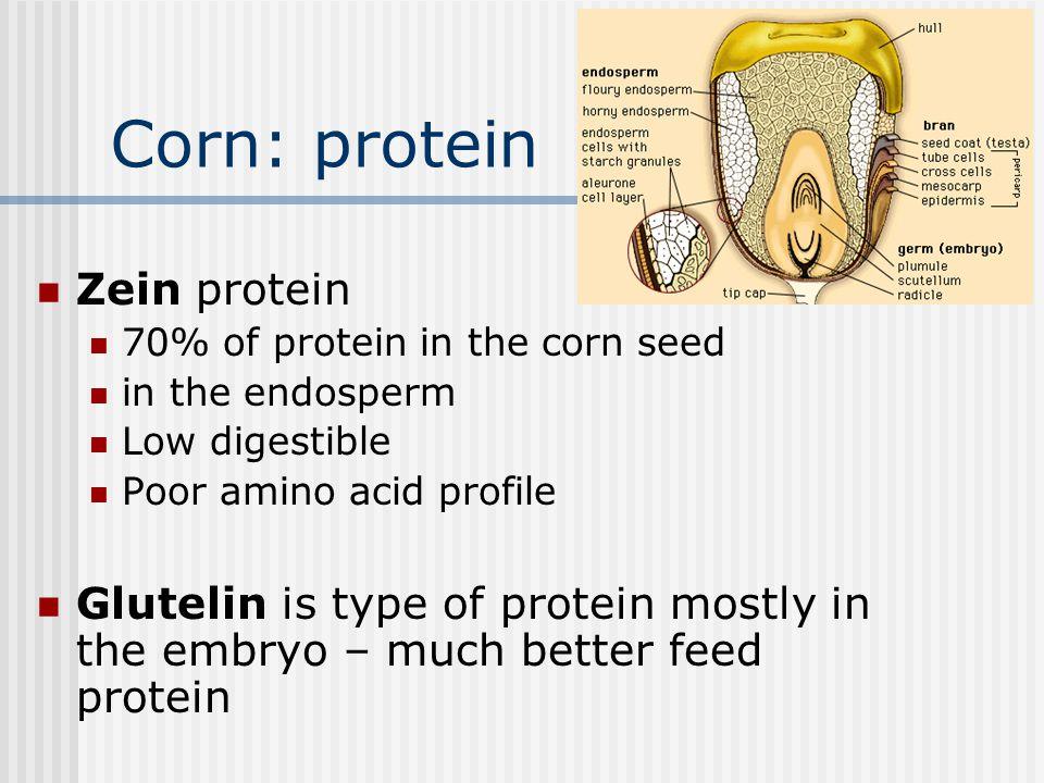 Corn: protein Zein protein