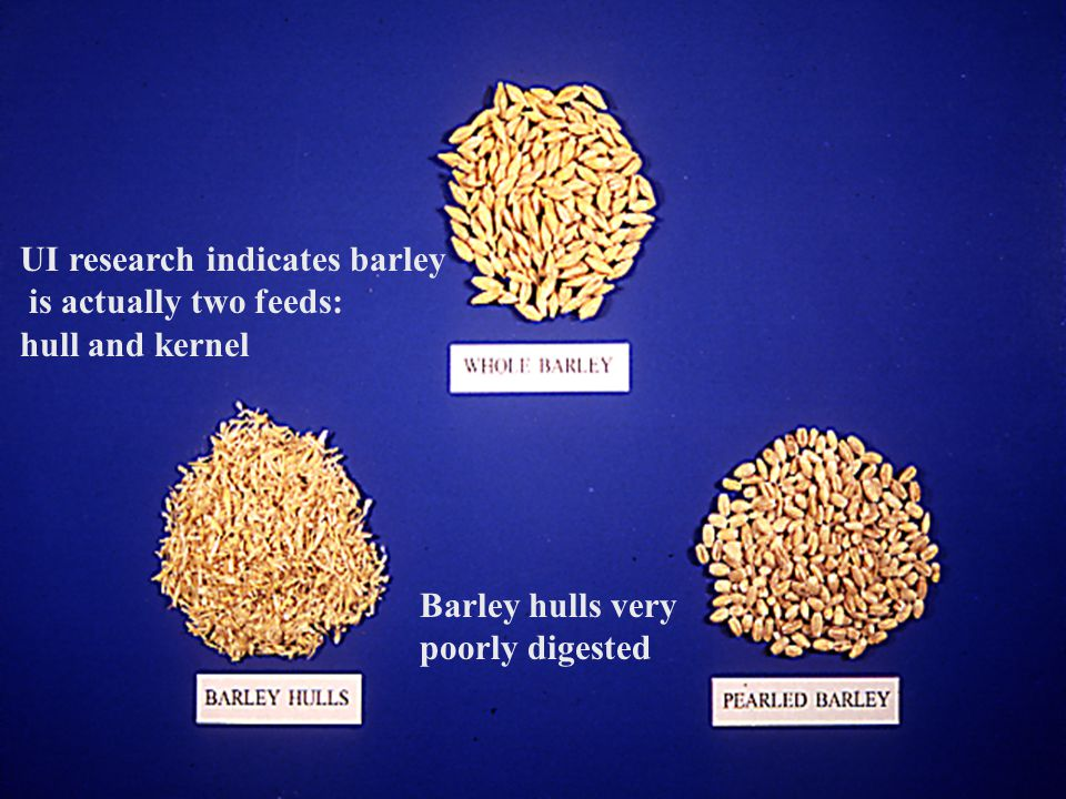 UI research indicates barley is actually two feeds: hull and kernel
