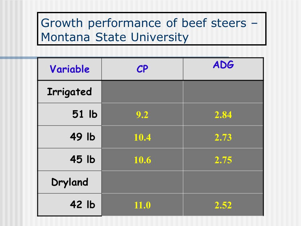Growth performance of beef steers – Montana State University