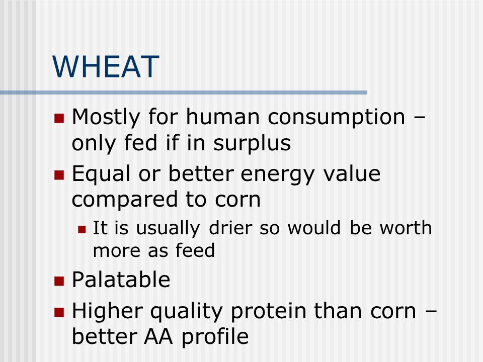 WHEAT Mostly for human consumption – only fed if in surplus