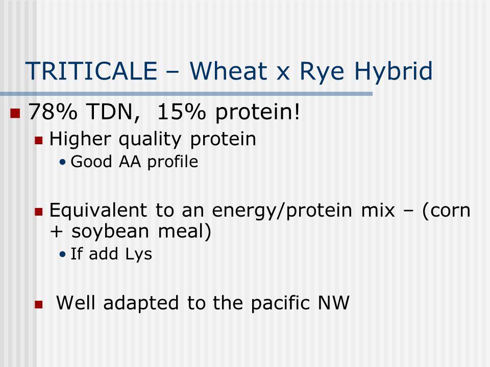 TRITICALE – Wheat x Rye Hybrid