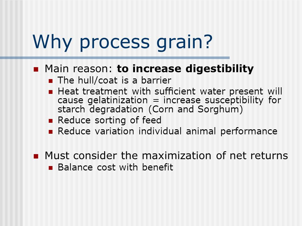 Why process grain Main reason: to increase digestibility