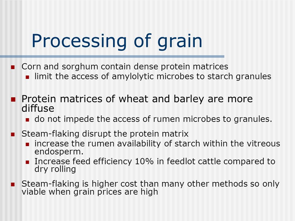 Processing of grain Corn and sorghum contain dense protein matrices. limit the access of amylolytic microbes to starch granules.