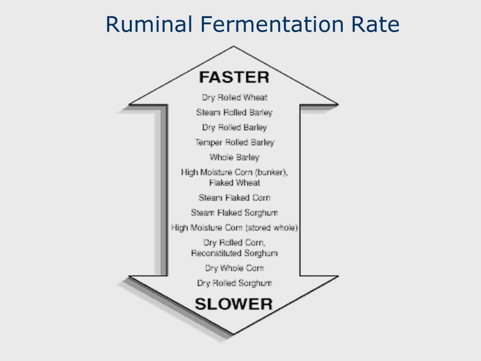 Ruminal Fermentation Rate
