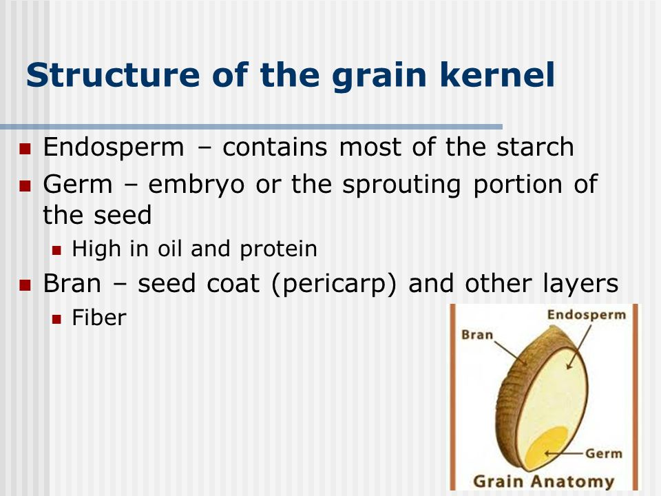 Structure of the grain kernel