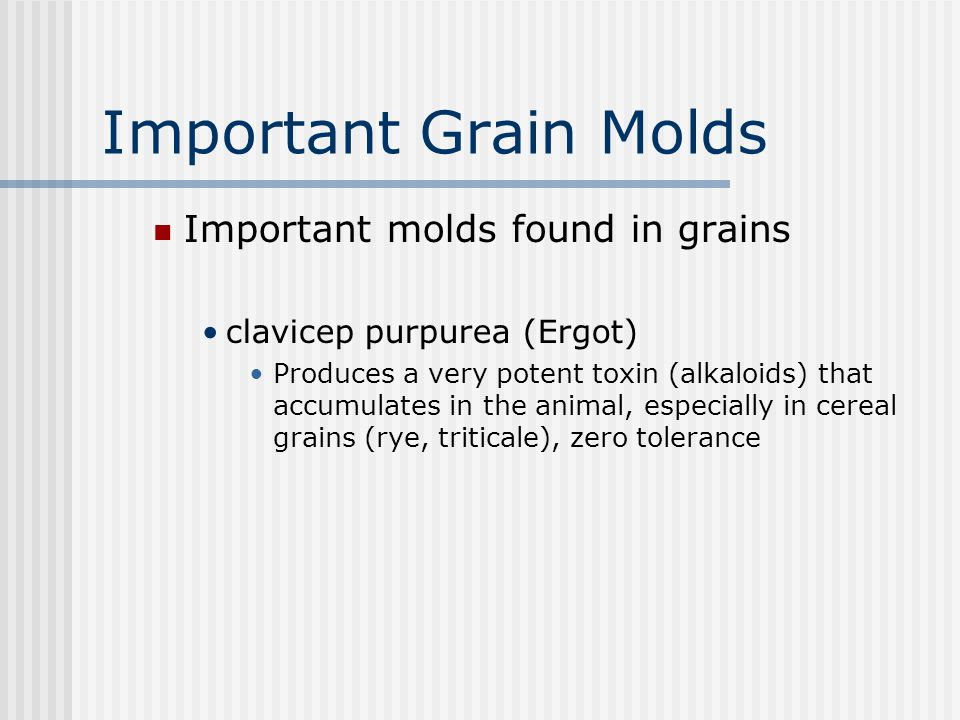 Important Grain Molds Important molds found in grains