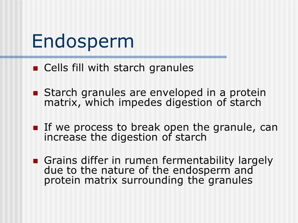 Endosperm Cells fill with starch granules