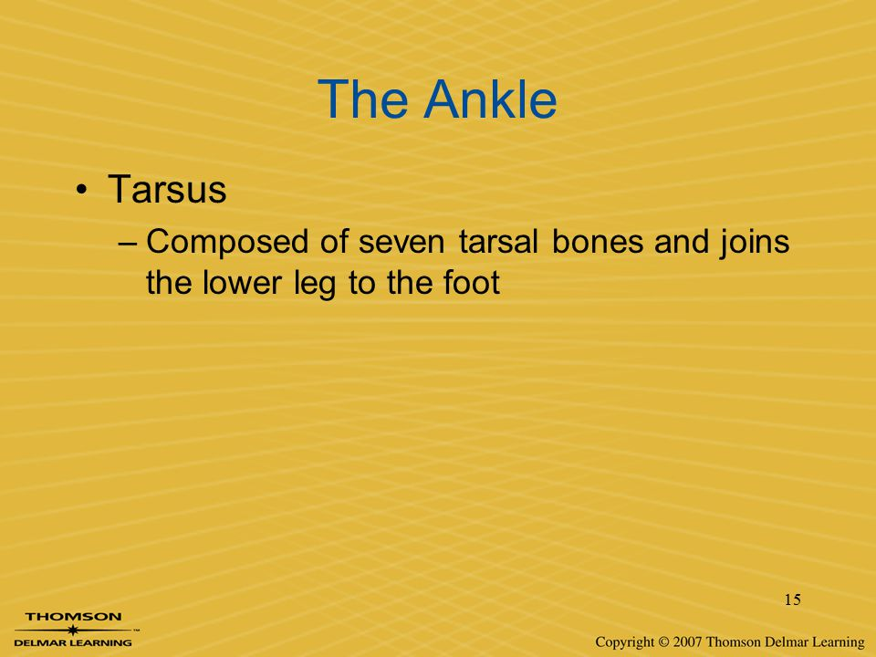 The Ankle Tarsus Composed of seven tarsal bones and joins the lower leg to the foot