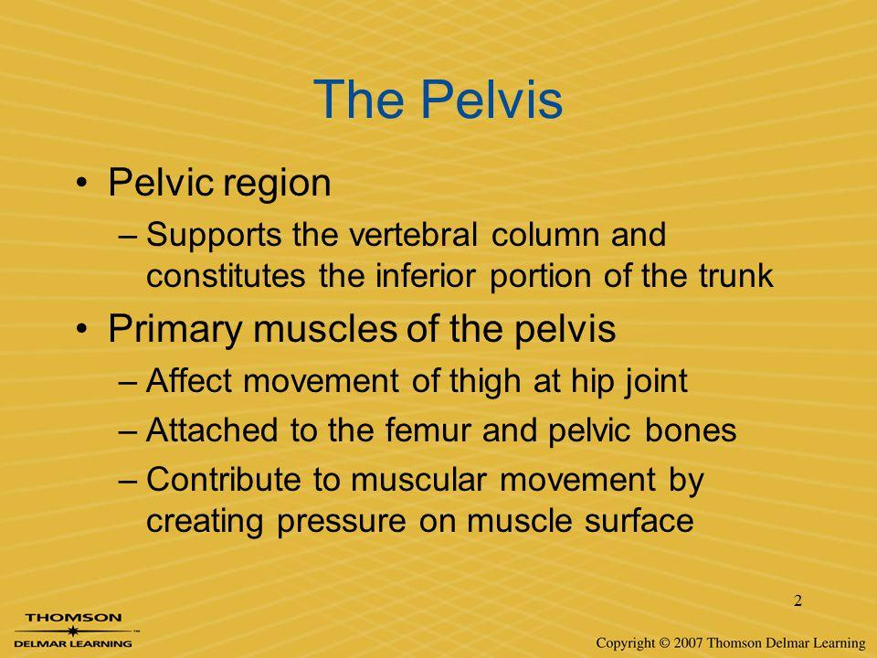 The Pelvis Pelvic region Primary muscles of the pelvis