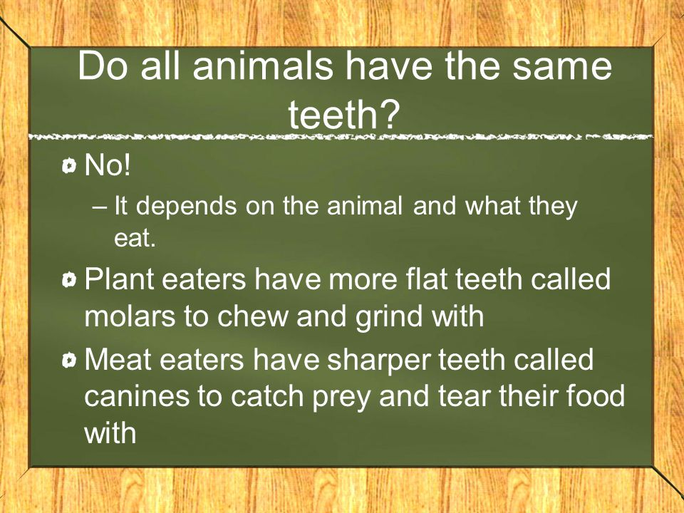 Do all animals have the same teeth