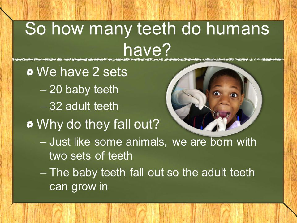 So how many teeth do humans have