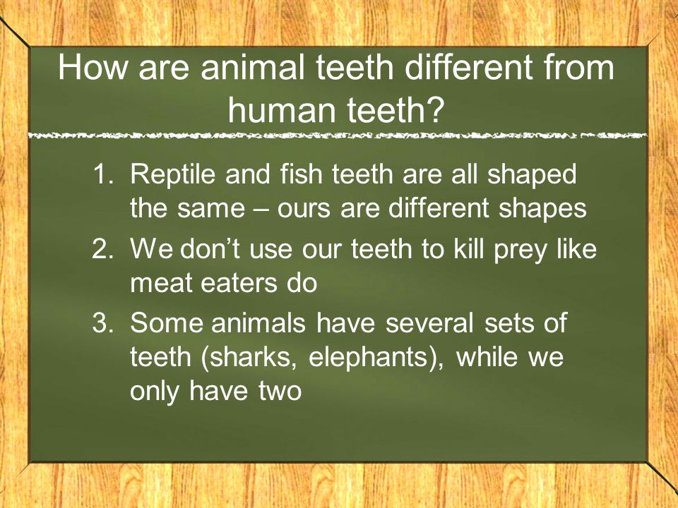 How are animal teeth different from human teeth