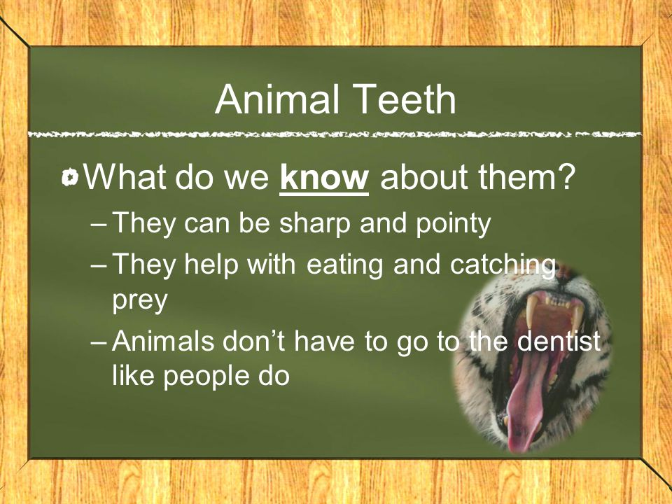 Animal Teeth What do we know about them They can be sharp and pointy