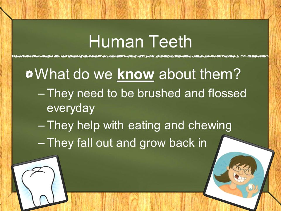 Human Teeth What do we know about them