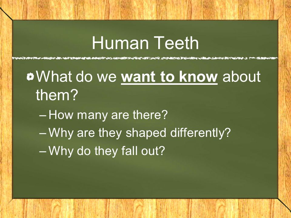 Human Teeth What do we want to know about them How many are there